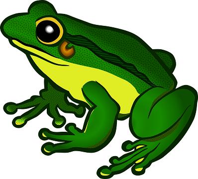 amphibian-1295172_960_720